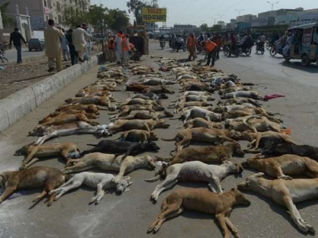 Municipal workers prepare to dispose of a pile of dog carcasses in a suburb of Karachi on February 11, 2015. PHOTO: AFP
